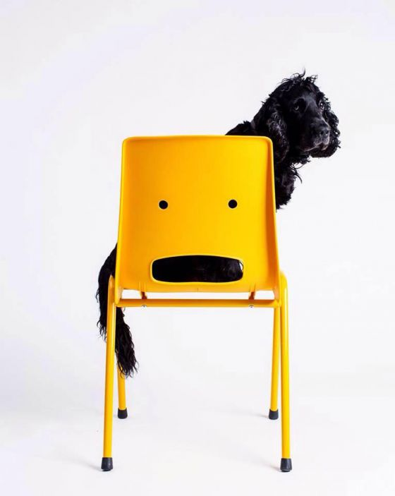 :O Chair and a dog
